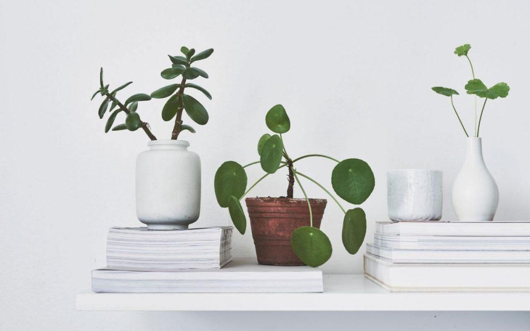 Minimalist Living 101: Easy Tips for Beginners